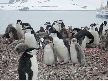 남극11.jpg